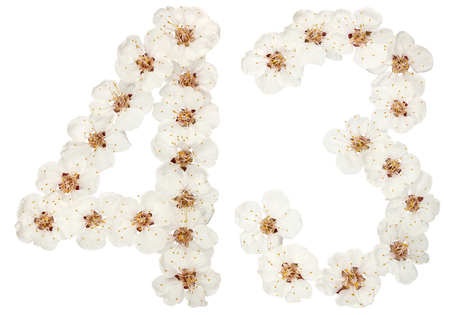 Numeral 43, forty three, from natural white flowers of apricot tree, isolated on white background