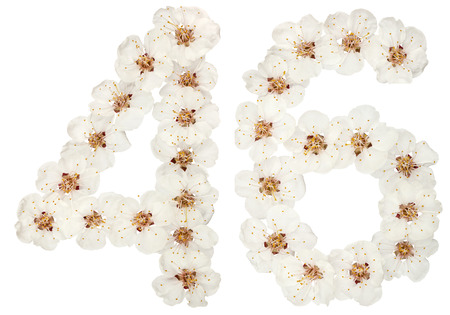 Numeral 46, forty six, from natural white flowers of apricot tree, isolated on white background