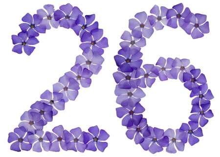 Numeral 26, twenty six, from natural blue flowers of periwinkle, isolated on white background
