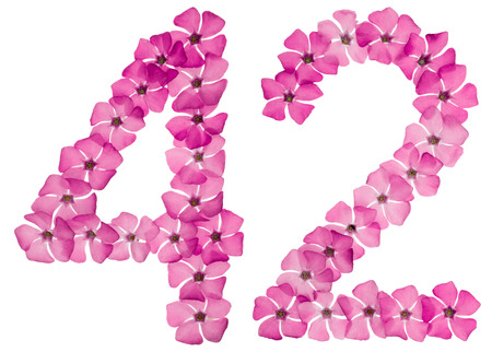 Numeral 42, forty two, from natural pink flowers of periwinkle, isolated on white background