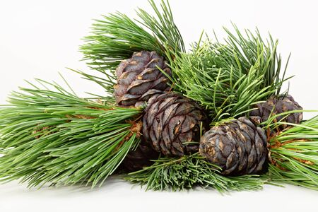 Photo for Branches and mature cones of Siberian cedar pine. Close-up, studio shot. - Royalty Free Image