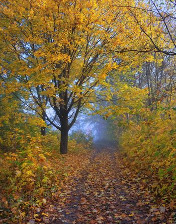 A path is in the autumn forest. Morning fog