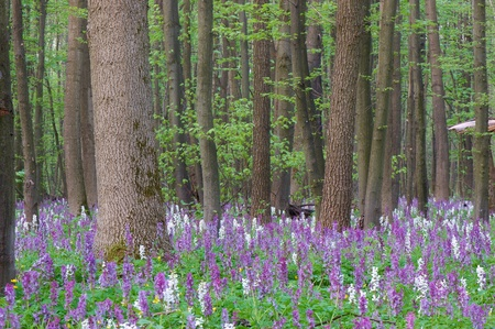 The first spring flowers in wood