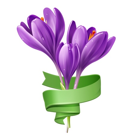 Illustration of spring flowers crocus with green ribbon on a white background