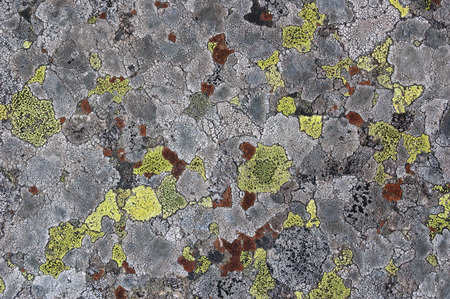 Natural abstract background. Texture of lichen on stone close upの写真素材