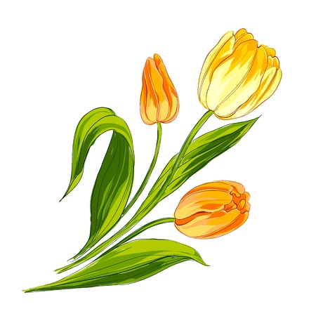 Tulip bouquet isolated over white  Vector illustration