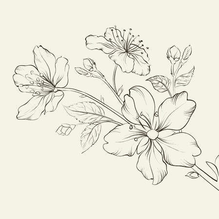 Illustration pour Calligraphy cherry blossom. Vector illustration. - image libre de droit
