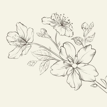 Calligraphy cherry blossom. Vector illustration.