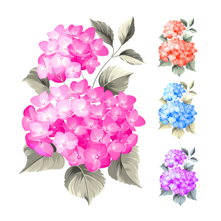 Purple flower hydrangea on white background. Mop head hydrangea flower isolated against white. Beautiful set of colored flowers.Vector illustration.のイラスト素材