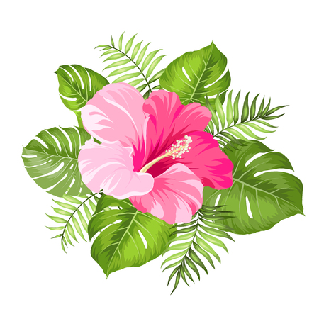 Tropical flower isolated over white background. Vector illustration.
