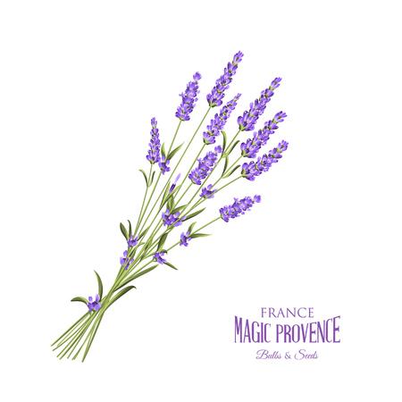 Ilustración de The lavender elegant card with bouquet of flowers and text. Lavender garland for your text presentation. Label of soap package. Label with lavender flowers. Vector illustration. - Imagen libre de derechos
