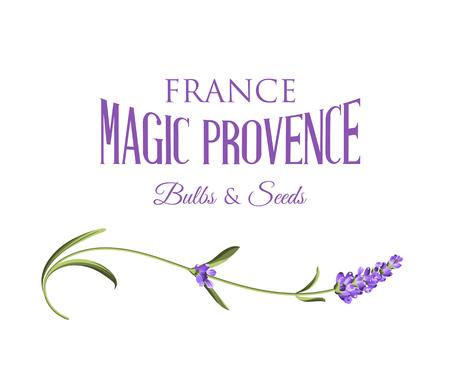 Ilustración de Lavender sign label. Label of lavender flowers on a white background. Label of soap package. Vector illustration. - Imagen libre de derechos