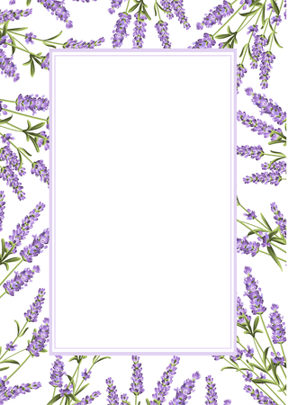 Ilustración de The Lavender frame line. Bunch of lavender flowers on a white background. Vector illustration. - Imagen libre de derechos