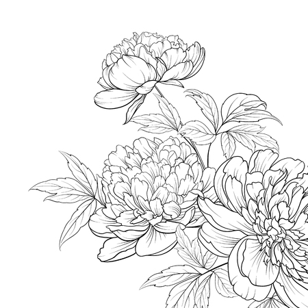 Illustration pour Spring flowers bouquet of peony garland. Wedding card with flowers over white background. Vector illustration. - image libre de droit