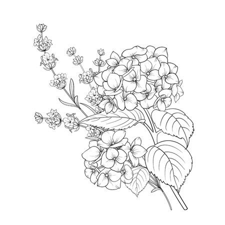 Ilustración de Floral design of lavender and hydrangea isolated over white background. Spring bouquet of flowers in line sketch style. Vector illustration - Imagen libre de derechos