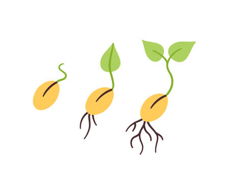Illustration pour Seeds and seedlings. Germination of sprouts in doodle style. Hand drawn isolated vector illustration on white background - image libre de droit