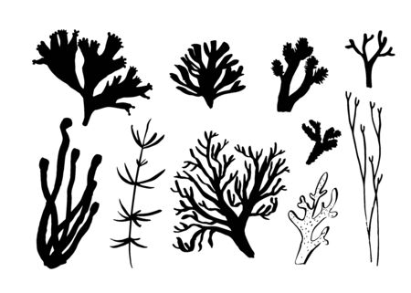 Illustration pour Seaweed, coral and algae set. Different silhouettes of underwater fauna. Black hand drawn vector illustration - image libre de droit