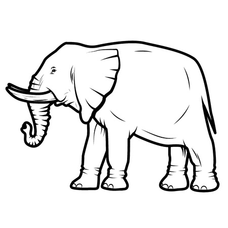 vector illustration of  elephant isolated on white backgroundのイラスト素材