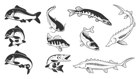 Set of river fish marks. River carp, crucian carp, perch, pike, catfish, perch, sturgeon.  Design element for logo, label, emblem, sign, brand mark. Vector illustration.