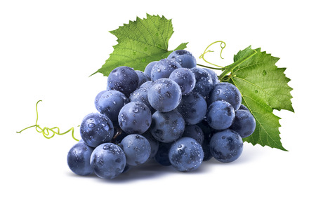 Blue wet Isabella grapes bunch isolated on white background as package design element
