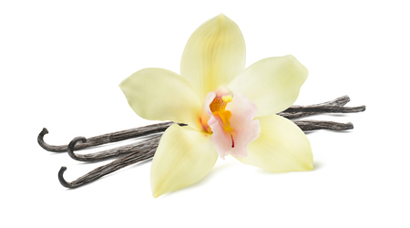 Photo for Vanilla stick and flower isolated on white background as package design element - Royalty Free Image