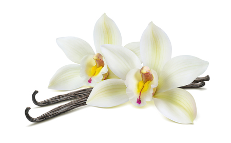 Photo for Double vanilla flower pod isolated on white background as package design element - Royalty Free Image