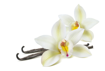 Photo for Double vanilla flower 2 isolated on white background as package design element - Royalty Free Image