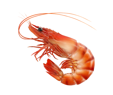 Photo for Cooked prawn or tiger shrimp isolated on white background as package design element - Royalty Free Image