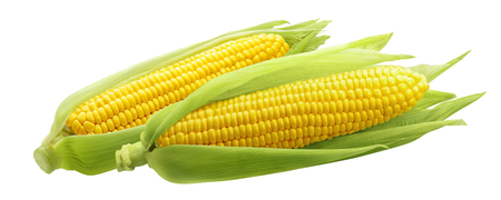Photo pour Corncobs or corn ears isolated on white background as package design element - image libre de droit
