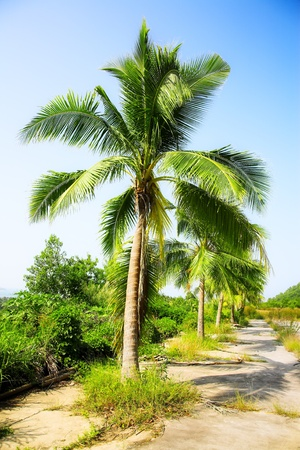 coconut palms on the blue sky background