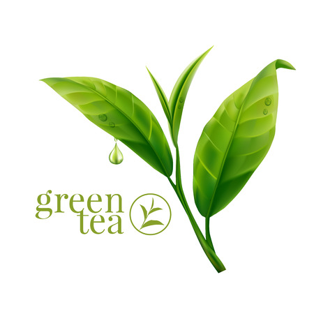 Illustration for Green tea leaf - Royalty Free Image