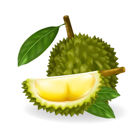 King Of Fruits Durian Isolated On White Backgroundvector