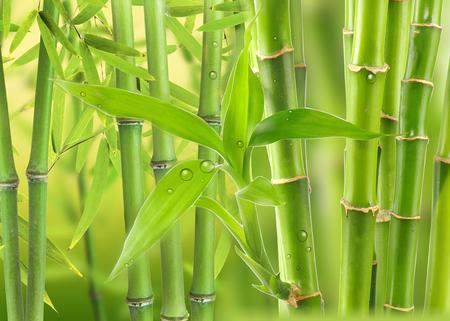 Bamboo grove in the tropics