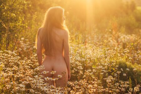 Foto per Naked woman with long hair staying by back in chamomile field in sunset - Immagine Royalty Free