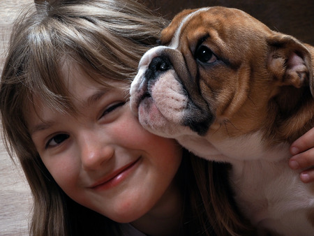Puppy English Bulldog and smiling girl. puppy and a human face large muzzle