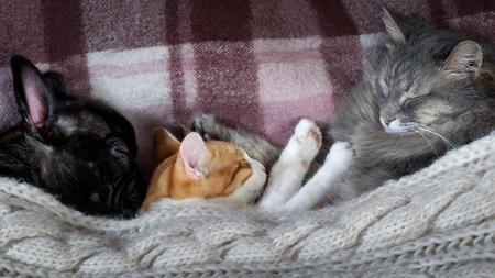 Two cats and a dog sleeping together on the bed under the blanket