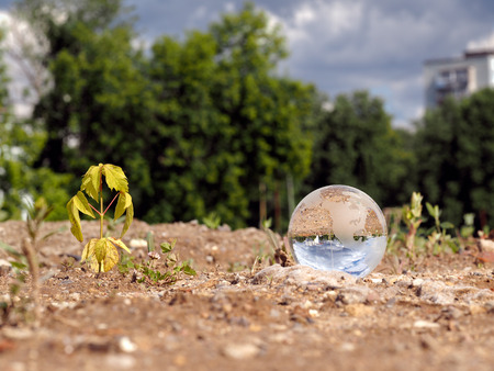 Photo for Dry, germ wilted and transparent ball in a vacant lot. In the bowl of a building reflects the city, blue sky. The concept of urban ecology, drought, environmental protection in the construction of houses - Royalty Free Image