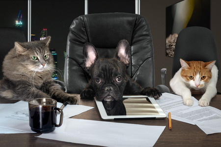 Foto de Businessmen in office. Dog head and cat - employees, managers. Different characters personality. The concept of career growth, business, humor, advice, pet products - Imagen libre de derechos