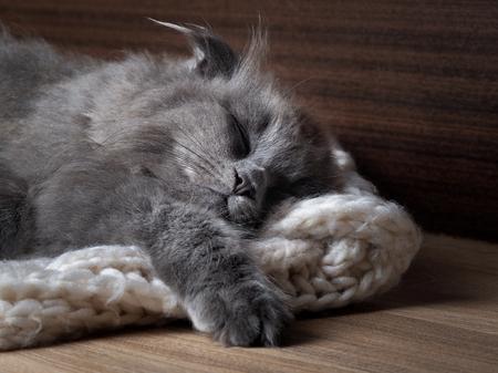 Gray cat sleeping. Many fur, muzzle contented kitten close