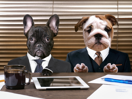 Photo pour Business dogs in suits at work behind the office table. The concept of manager and subordinate, different characters, office workers - image libre de droit