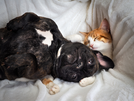 Dog and cat funny lying on a white blanket