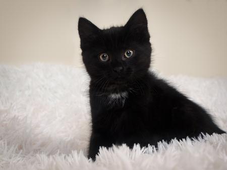 A little black kitten on a white furry blanket