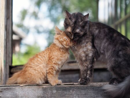 The cat takes care of her kitten with love. Mother and child cats