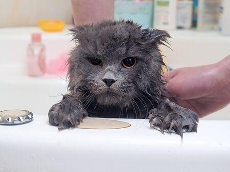 Photo pour Funny wet cat wash in the bathroom - image libre de droit