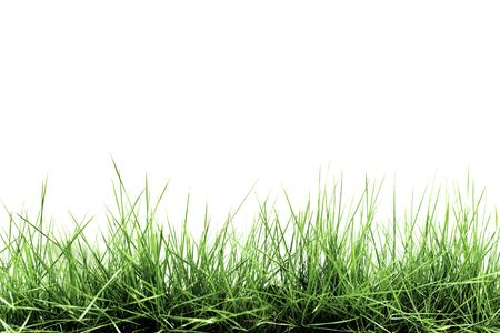 Photo pour Grass isolated on white background - image libre de droit