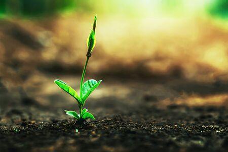 Photo pour Green trees grow naturally in the morning. - image libre de droit
