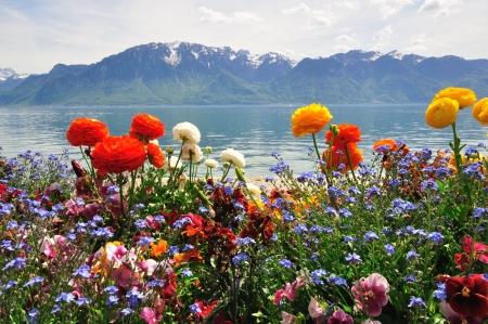 Foto de Flowers and mountains in Switzerland - Imagen libre de derechos
