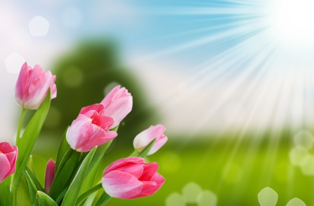 Photo for flower and nature spring bokeh background with sun beam - Royalty Free Image