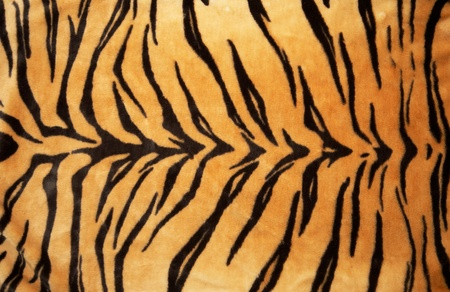 Texture of a Tiger skin (Fur )