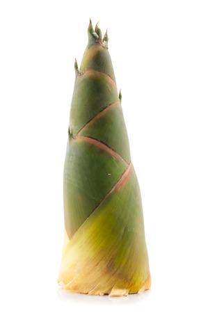 Shoot of Bamboo isolated on white background